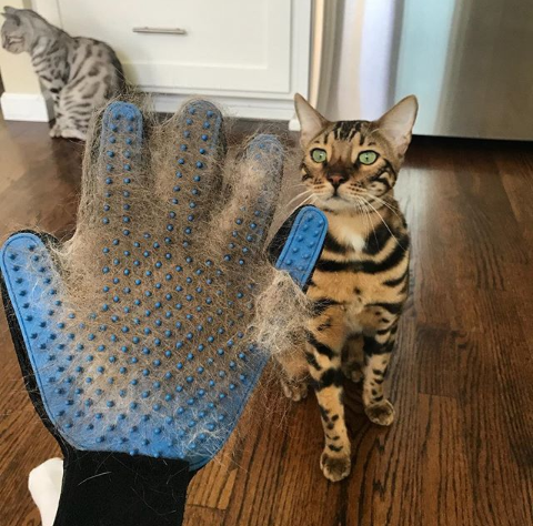 @GroomingGloves post pictures with pets in their account