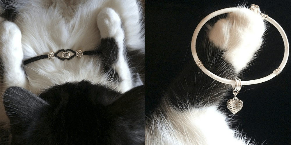 largo cats_2 (1)