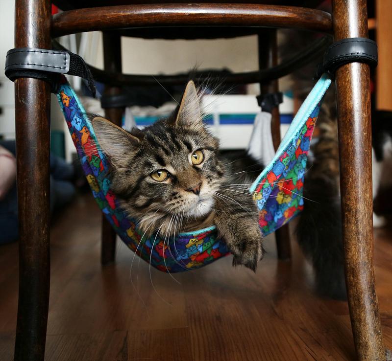 Гамак «Найди спящего кота»