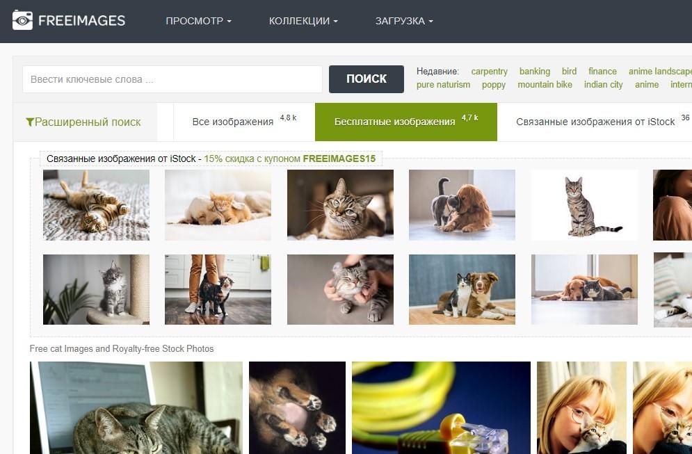 Где искать бесплатные фотографии для сайта: базы, фотостоки, подписки