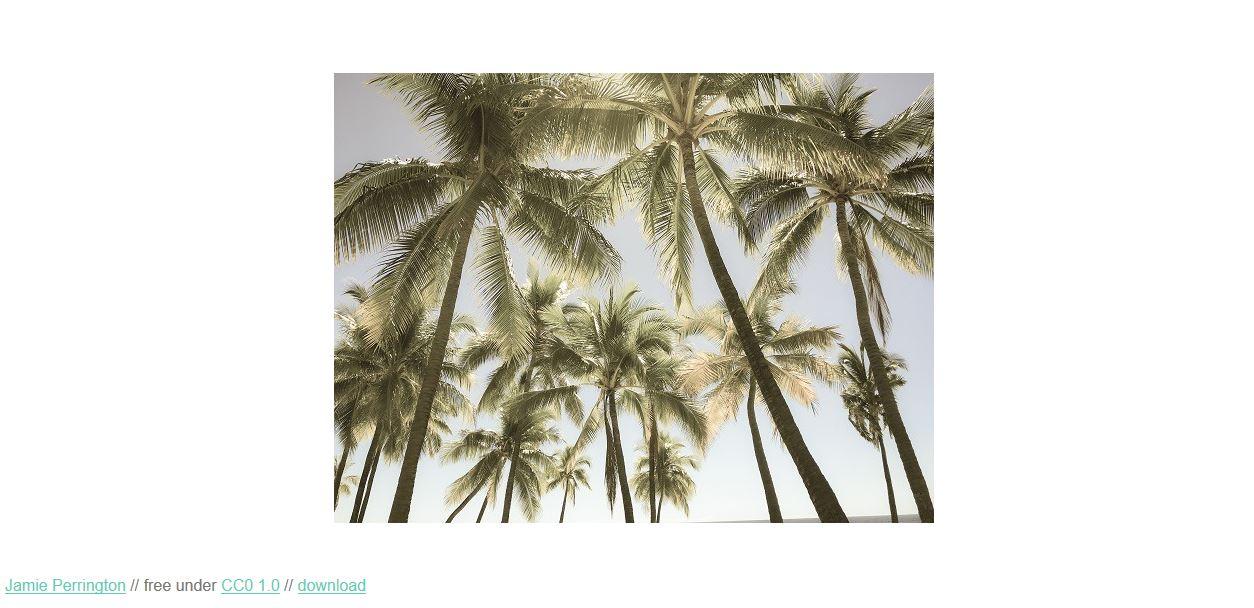 snapwiresnaps free stock photos